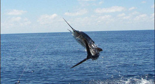 Sailfish-Deep-Sea-Fishing-Tour